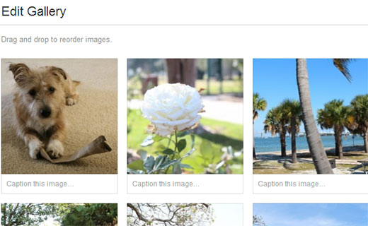 Add captions and arrange image order for gallery