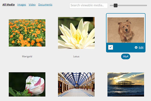 Images in WordPress media library displayed in a grid